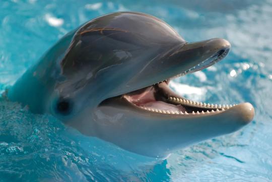 Swim With Dolphins Saturday 16