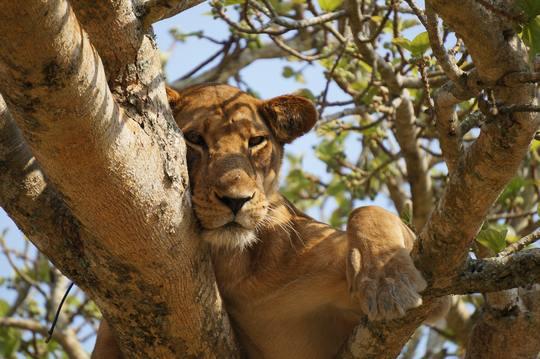 5 days Queen Elizabeth National Park Wildlife Safari