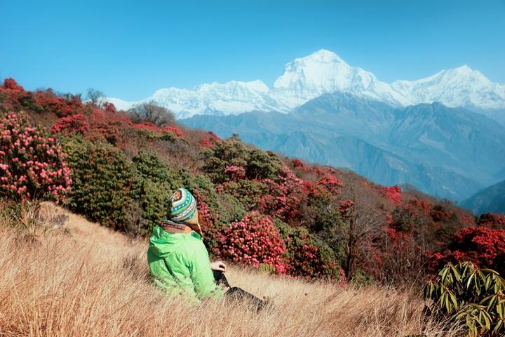 M_tourist_rhododendrons_himalaya11000x667