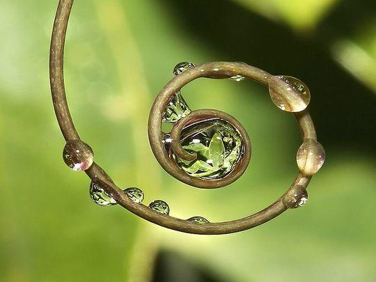 Circle of Sacred Nature