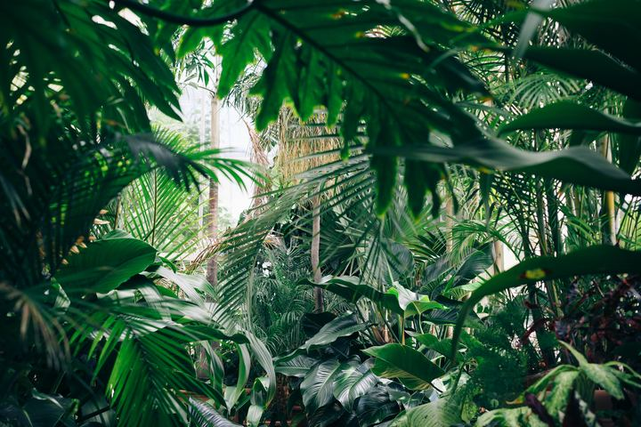 Envision Medicinal Plants and Botanical Gardens Tour