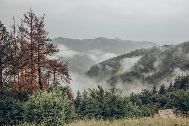 Mist on te Mountain