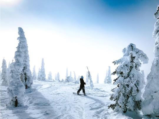 Freeride perfect : 6 après-midi pour maîtriser le hors piste et explorer la Forêt Blanche à Risoul
