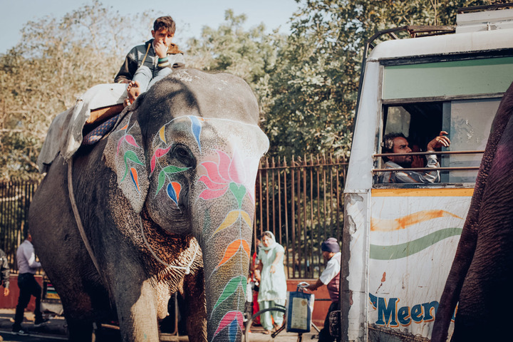 Golden Beats India Elephant Ride