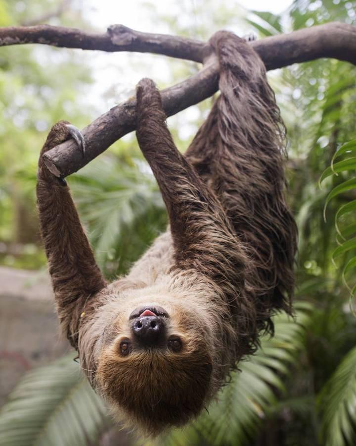 Sloth sanctuary visit, Puerto Viejo costa rica vacationjpg