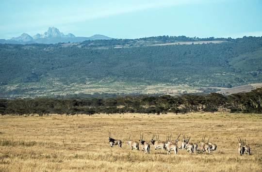 Walking Safari to Summit Mount Kenya
