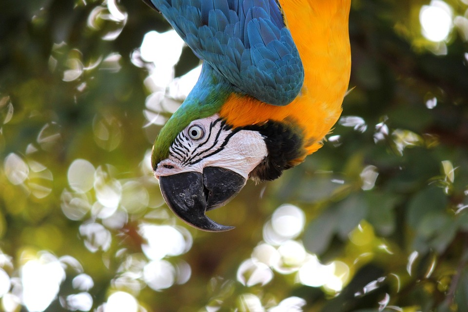 macaw1817586_1280