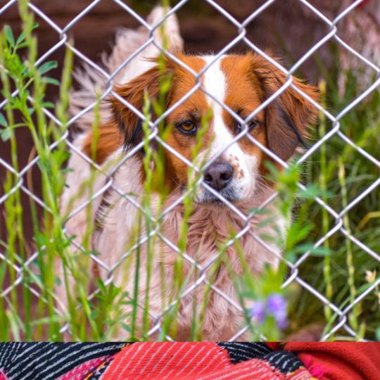 Volunteering at dog shelter