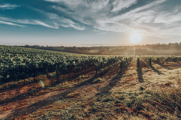 vineyard-2 (2)