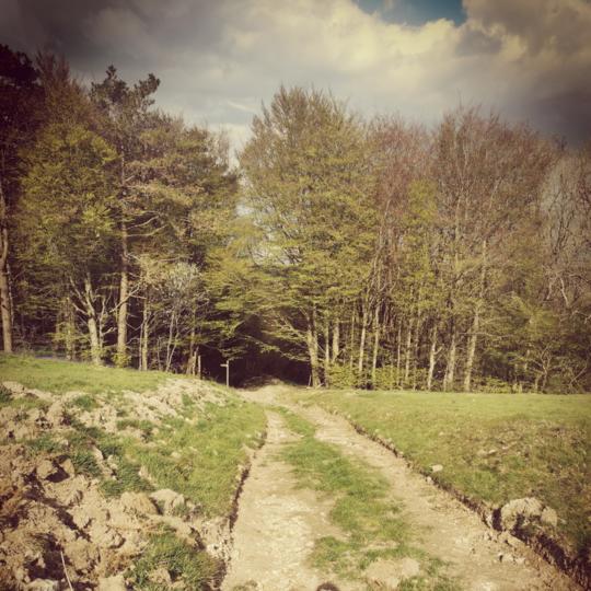 Walk the Dorset Gap (2 miles away)