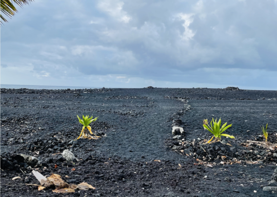 Volcanic Renewal