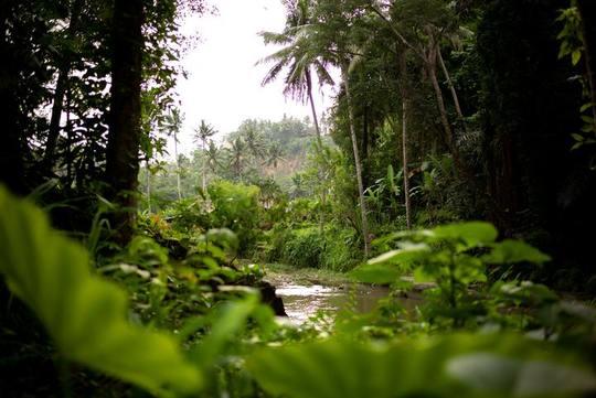 Sandoval Lake Lodge - Tambopata Reserve