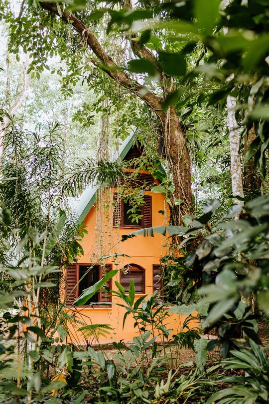 Jungle Boutique Accommodations