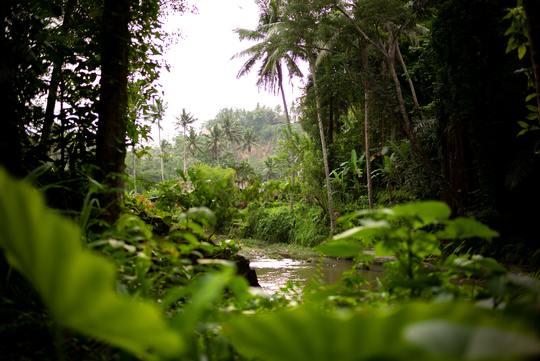 Extension to Amazon Rainforest (4 days/3 nights)