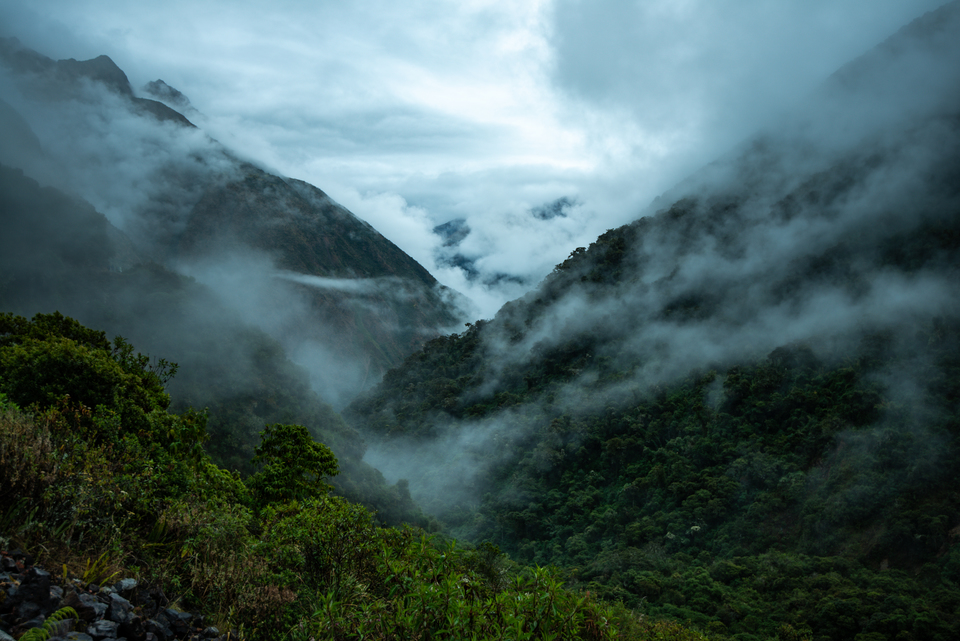 5 Days Ayahuasca Retreat with Meditation & Volunteering Experience