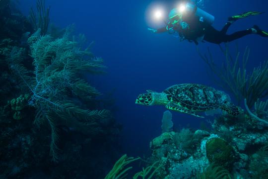 Scuba Dive Work Away