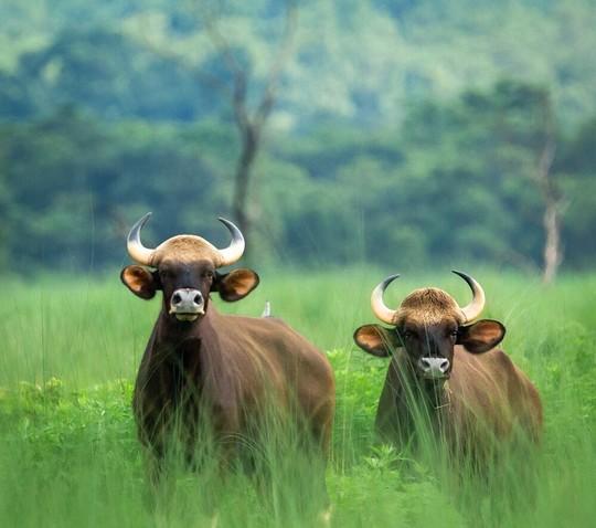 Jungle Safari Full Day Extension