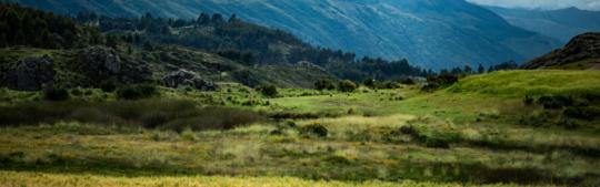 3 Days Ayahuasca Retreat with Meditation & Volunteering Experience